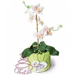Торт Орхідея - краса в вазоні